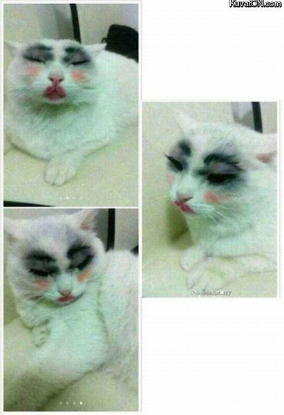 mačička picx kurva v tesnej mačička